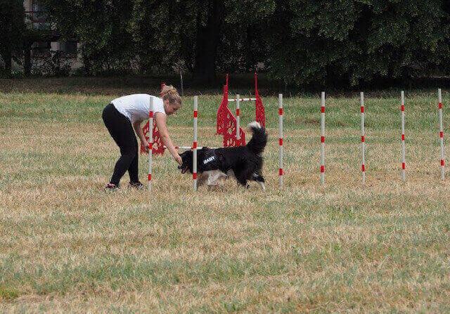 disciplíny psov
