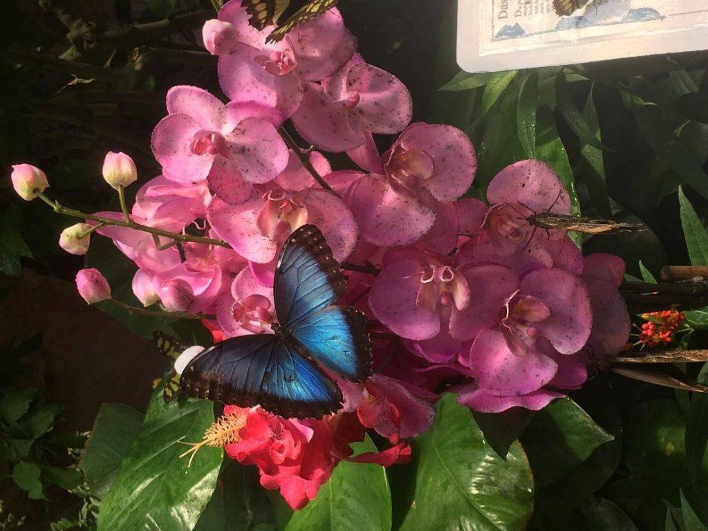 dom motýľov viedeň atrakcia