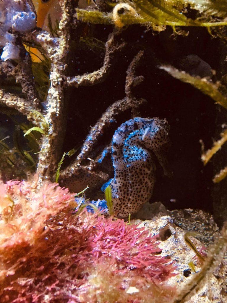 morský koník viedeň