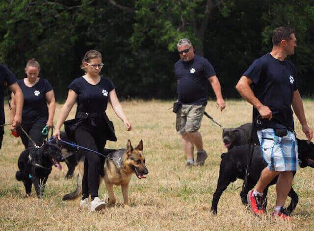 súťaže psov