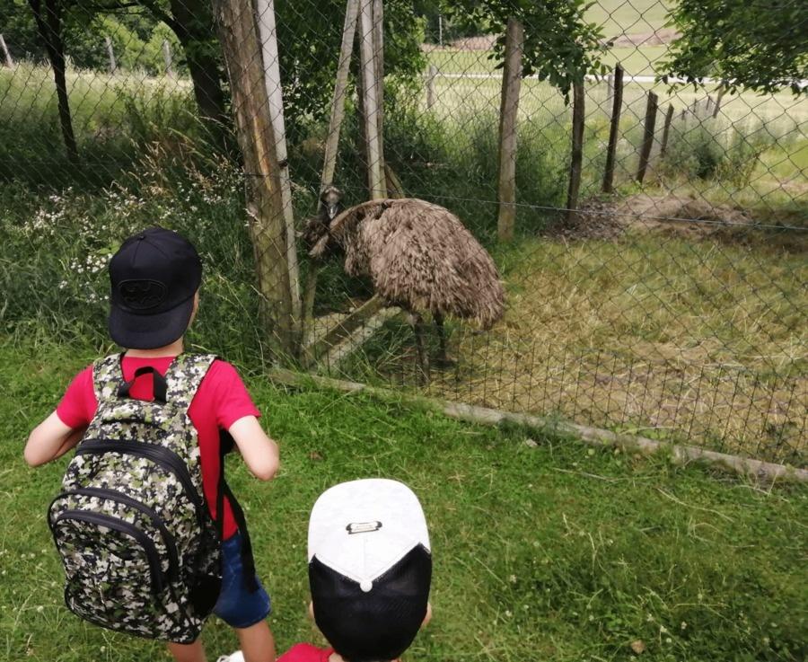 zoo farma