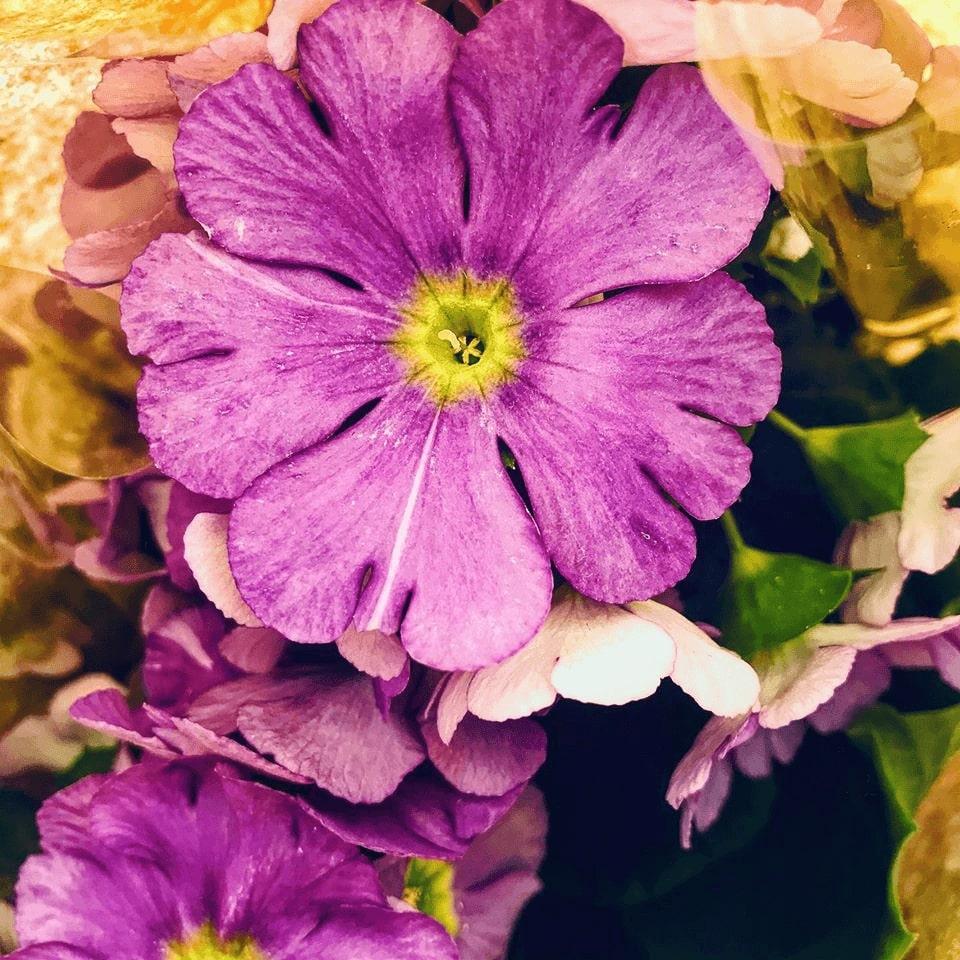 polievanie kvetov