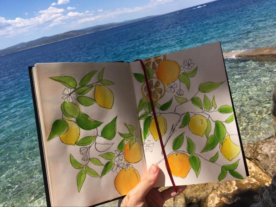 kresba citrusov v knihe