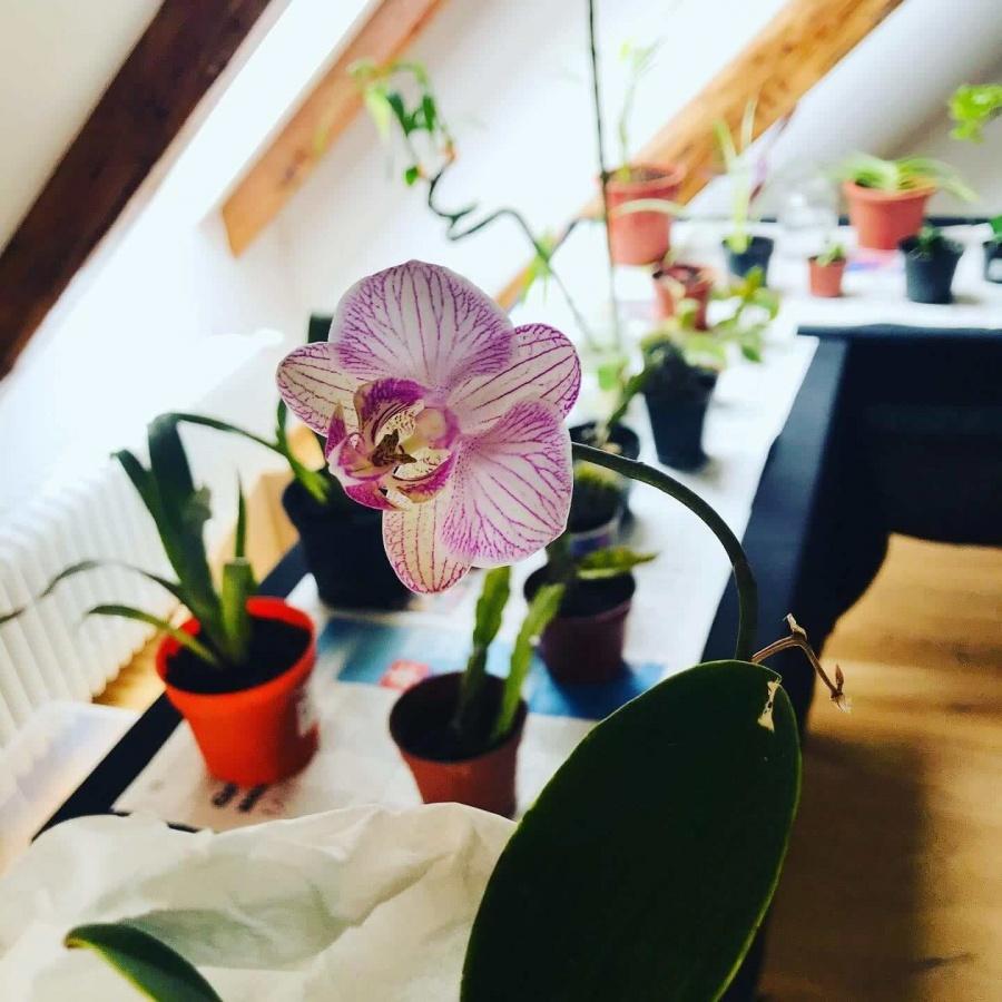 Swap rastliniek v Trnave